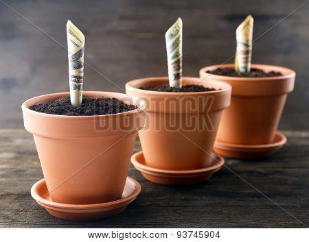 Growing money in flowerpots on wooden background