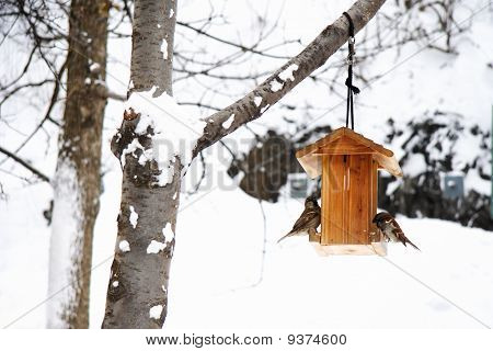 Winter Scene With Snow And Birds