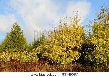 Mountain Meadow in Fall Colors in Early Morning