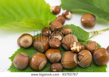 Raw Hazelnuts On A Green Leaf