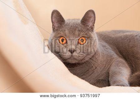 Hypnotic Cat