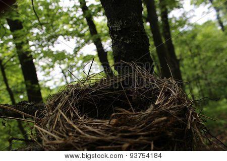 Unoccupied Bird's Nest
