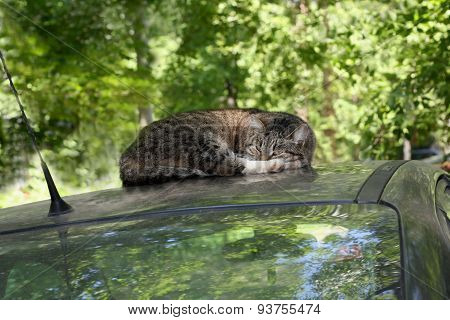 The Cat On The Car
