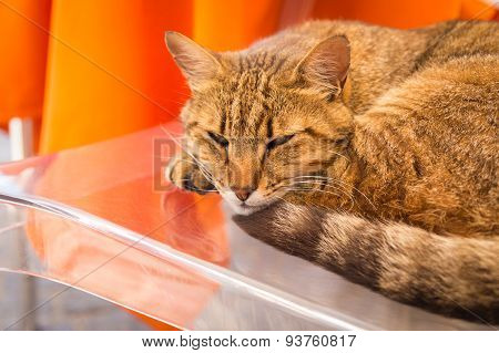 Red cat lays on a glass table.