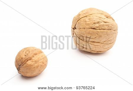 Brown, Fresh, Small And Big Walnuts On White Background