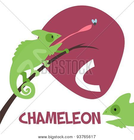 Funny cartoon animals vector alphabet letter set for kids. C is Chameleon