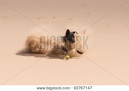 Happy black dog playing with a ball in the sand