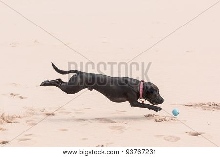 Happy black dog playing with a ball at the beach