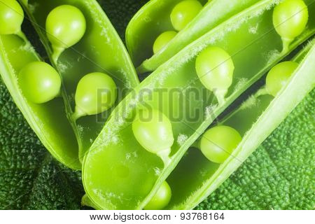 disclosed several pods of green peas on a green leaf textural. close-up