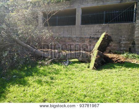 Broken by storm