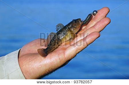 Goby in hand fisherman closeup