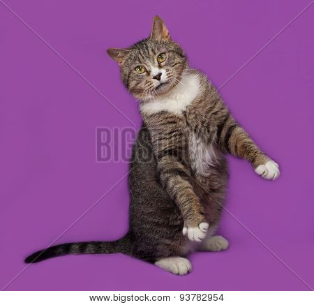 Gray And White Tabby Cat Standing On Lilac