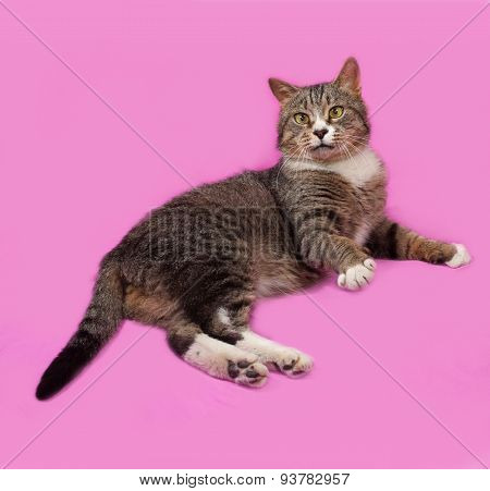 Gray And White Tabby Cat Lying On Pink