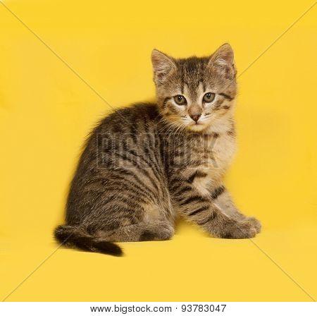 Tabby Kitten Sitting On Yellow