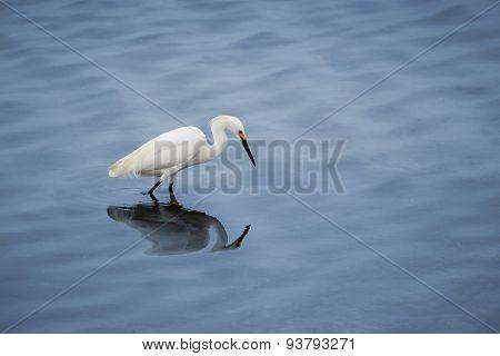 Snowy Egret Crane