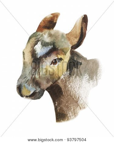 Watercolor calf portrait illustration. Hand-drawn vector