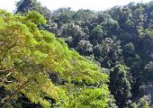 stock photo of south east asia  - The evergreen tropical trees south of Thailand South East Asia - JPG