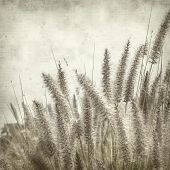 foto of tail  - textured old paper background with cat tail grass - JPG
