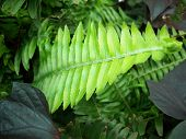 image of fern  - Close up of a green fern frond - JPG