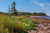 stock photo of shoreline  - The shoreline on the south shore of Prince Edward Island - JPG