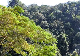 image of south east asia  - The evergreen tropical trees south of Thailand South East Asia - JPG