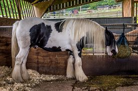 picture of feeding horse  - Beautiful white horse eating hay in his stable on a farm - JPG