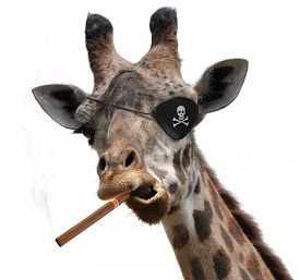 picture of pirates  - Funny animal portrait of a giraffe with a black pirate eyepatch and a big cigar - JPG