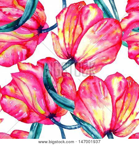 A seamless pattern with the watercolor crimson and scarlet tulips on a white background