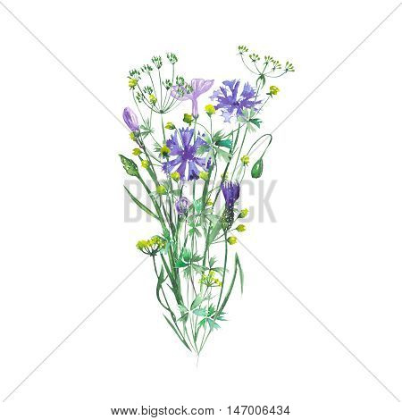 Isolated bouquet of wildflowers and cornflowers painted in watercolor on a white background, decoration postcard, greeting card or invitation