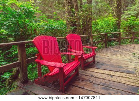 Rain forest in Vancouver island, British Columbia, Canada