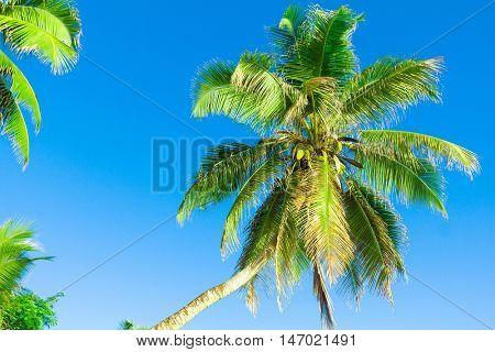 Overhanging Scene Tree