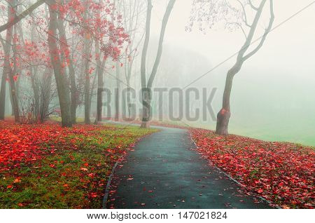 Autumn nature - autumn view of foggy autumn park alley in dense fog. Foggy autumn landscape with bare autumn trees and red dry fallen leaves. Autumn alley in dense autumn fog. Soft filter applied.