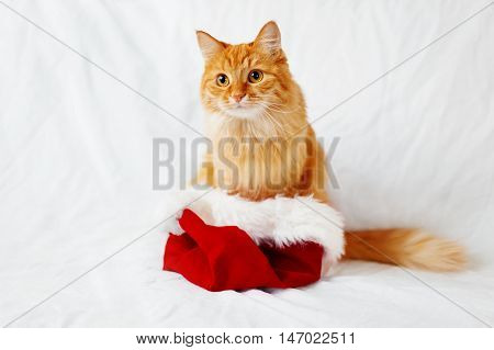 Cute ginger cat in Santa's hat. Christmas and New Year background with fluffy pet and place for text.