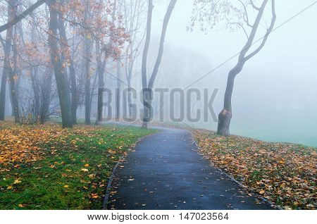 Autumn nature in cold tones-foggy autumn alley.Autumn park alley in dense fog- foggy autumn landscape of lonely alley with bare autumn trees and orange fallen leaves. Autumn alley in dense autumn fog.