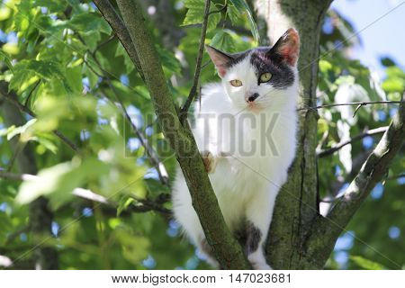 White spotted cat sits on the tree and looks scared
