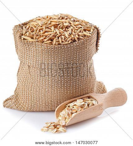 oat grains with husk in burlap bag with wooden scoop full of oatmeal near isolated on white background. Uncooked oat grains with husk and oat flakes isolated on white background. Oat grains with husk. Cereal grains