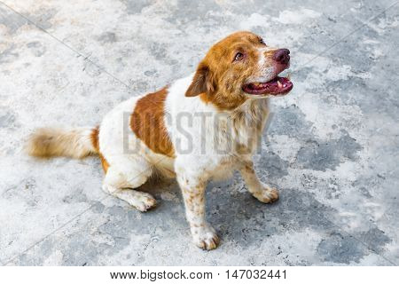 A Dog is sitting on concrete floor.