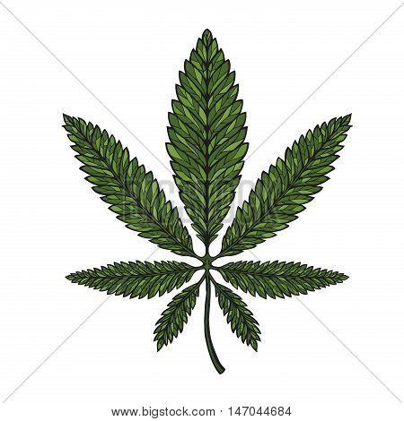 Hand-drawn leaf hemp, cannabis in decorative style. Marijuana vector illustration