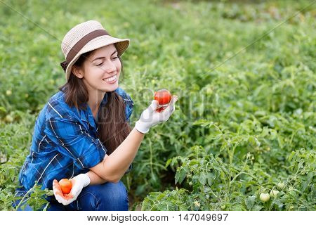 Young farmer harvesting tomatoes photo with copy space and horizontal shot. Woman in her garden harvesting tomatoes. Happy young girl with tomato. Harvesting