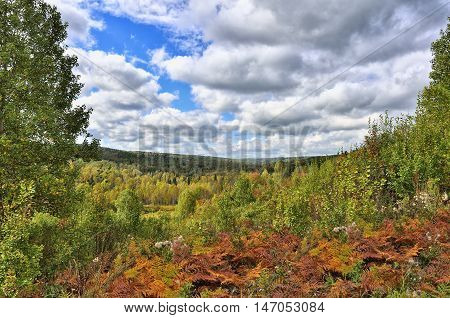 Colorful autumn landscape in the forest. View of the endless forests from the hill top covered with red fern leaves.