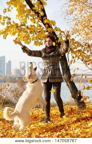 Woman playing with her dog, golden retriever, in autumn park