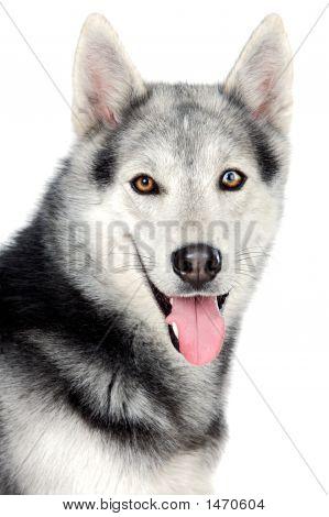 Adorable perro
