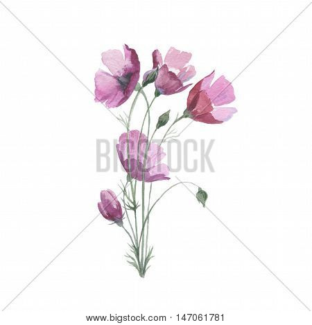 Wildflower flower poppy in a watercolor style isolated. Full name of the herb: papaver, poppy, opium poppy. Aquarelle flower could be used for background, texture, pattern, frame or border.