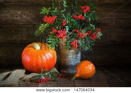 Autumn still life with pumpkins and rowanberry in rustic style on wooden surface