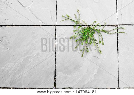 Green Plant Growing Between White Surface Concrete Floor Gap In Beautiful Shape. Hope Of Life Abstra