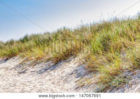 Beach And Dunes With Beachgrass