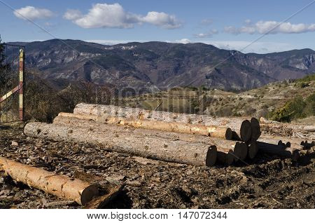 Timber of coniferous in a mud on a hill