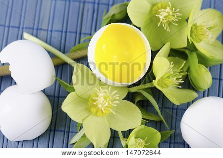 Happy Easter decoration with hellebore and yellow tempera paint in an egg shell