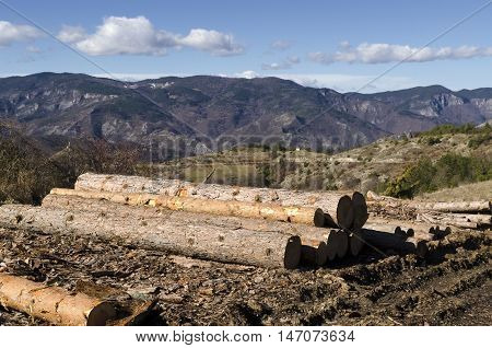 Stack of timber in a mud on a hill