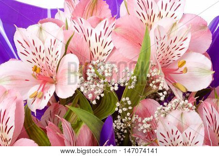 Bouquet of Alstroemeria close up macro background.